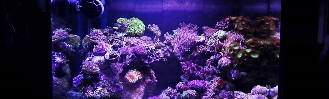 Jual Aquarium Air Laut Online