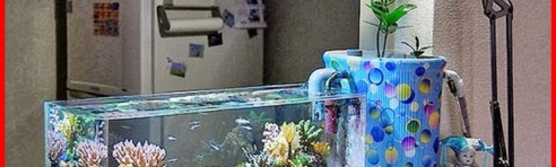 Daftar Alat Pendukung Akuarium Air Laut