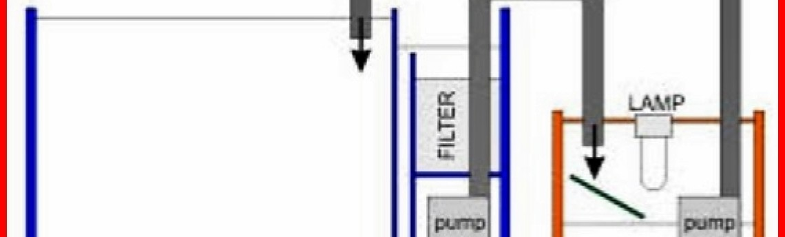 Membuat Filter Akuarium Air Laut Yang Mudah