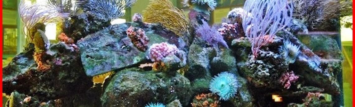 Jasa Dekorasi Akuarium Ikan Air Laut di Jakarta