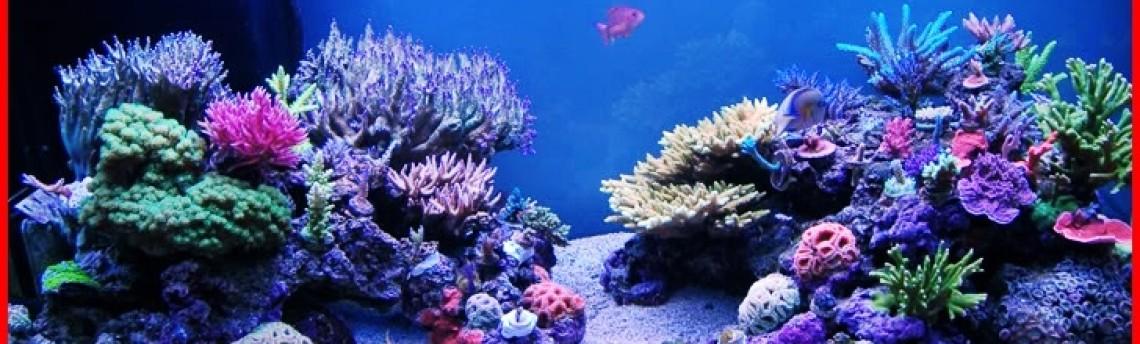 Jasa Pembuatan Aquarium Air Laut di Jakarta
