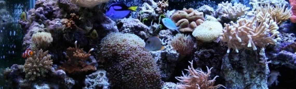 Vendor Aquarium Air Laut Jakarta