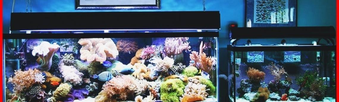 Jasa Pembuatan Aquarium Air Laut di Tangerang