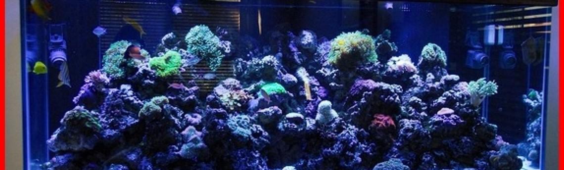 Jasa Setting Aquarium Laut di Tangerang