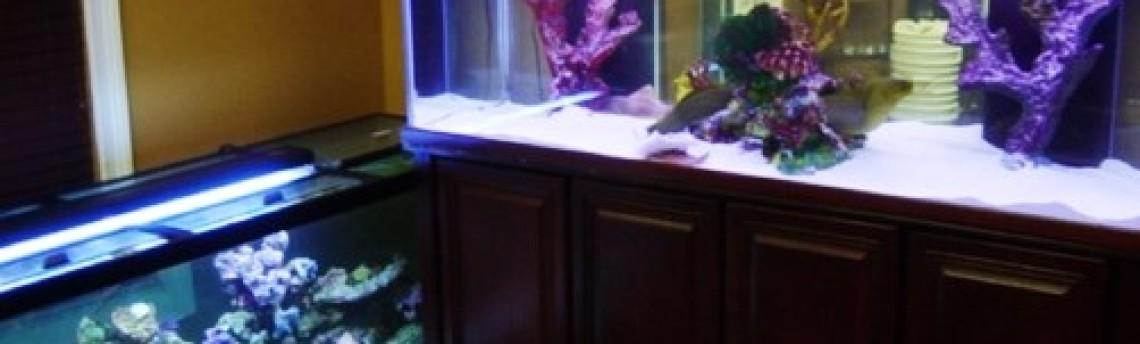 Harga Aquarium Ikan Hias Laut Standar