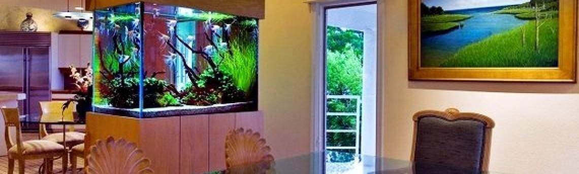 Jasa Pembuatan Aquascape Untuk Apartemen Terbaik