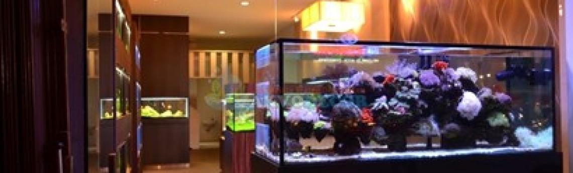 Toko Aquascape Di Jakarta dan Sekitarnya