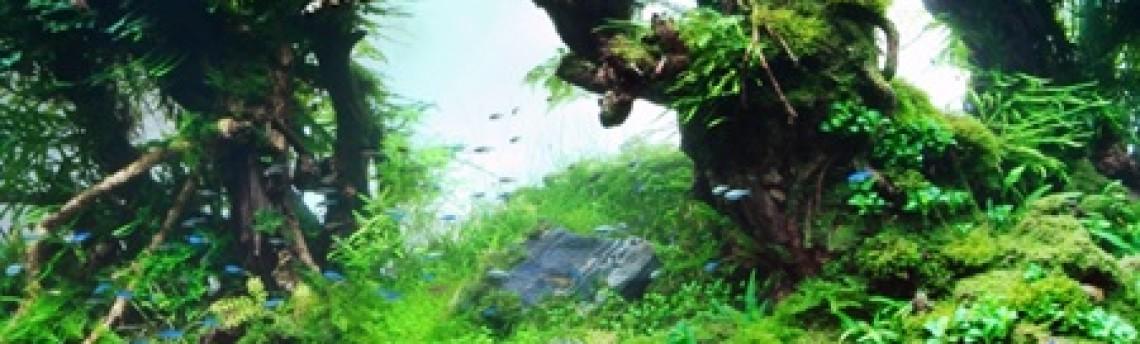 Ahli Aquascape dan Aquarium Jakarta