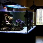 Dimana Jasa Pembuatan Aquarium Air Laut di Jakarta?
