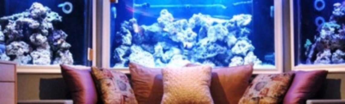 Jasa Dekorasi Aquarium Air Laut di Jakarta Yang Terpercaya