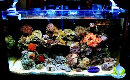 Jasa Desain Aquarium Air Laut Di Jakarta