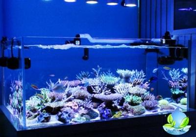 Jasa Pemasangan Aquarium Air Laut Restoran Di Jakarta