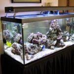 Cara Tepat Mendapati Jasa Perawatan Aquarium Air Laut Jakarta