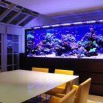 Jasa Setting Aquarium Air Laut di Jakarta