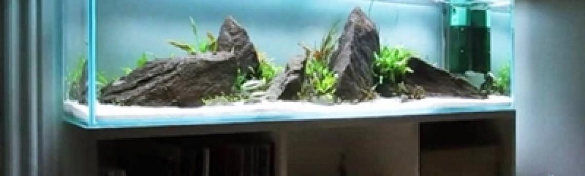 Jasa Desain Aquascape di Jakarta Untuk Anda