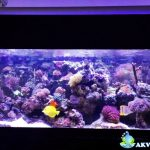 Jasa Pembuatan Aquarium Air Laut untuk Apartemen