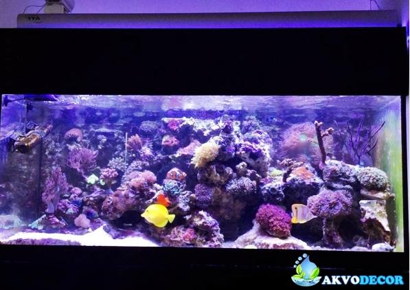Jasa Pembuatan Aquarium Air Laut untuk Apartemen - Akvodecor