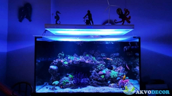 Jenis-Jenis Aquarium Air Laut 1 akvodecor