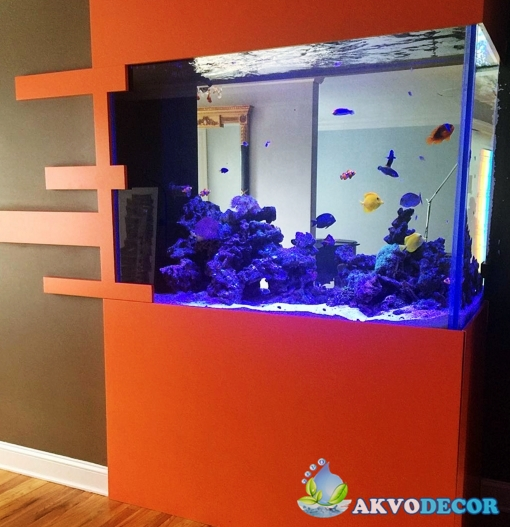 Jenis-Jenis Aquarium Air Laut 3 akvodecor