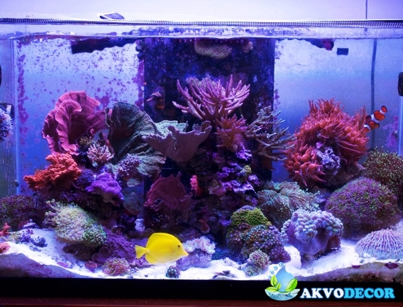 Jenis-Jenis Aquarium Air Laut 4 akvodecor