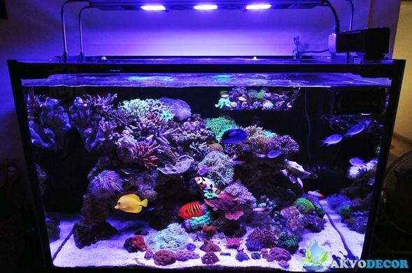 Tempat Jual Aquarium Air Laut di Serpong