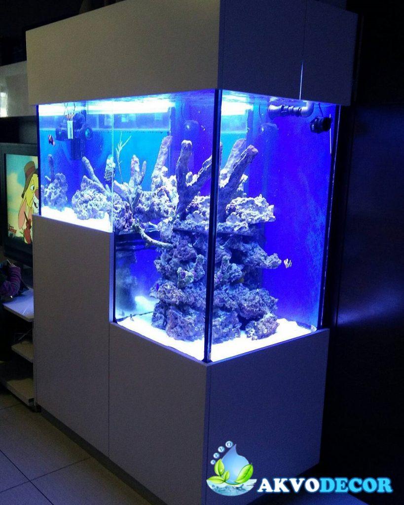 Jual Aquarium Air Laut di Jakarta