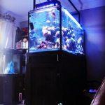 Jual Aquarium Air Laut di Tangerang