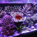 Keunggulan Aquarium Air Laut