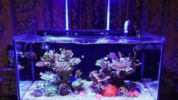 Aquarium Air Laut Bisnis yang Cukup Menjanjikan