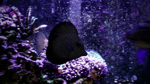 Toko Aquarium Hias Air Laut Online di BSD