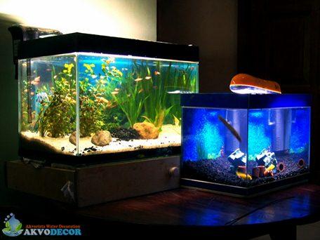 Jual Aquascape Murah, Desain Aquascape, Jual Aquascape Jakarta