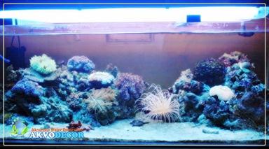 Hobi Aquarium Air Laut,Komunitas Aquarium Air Laut,Konsultasi Aquascape,Jasa Desain Aquascape