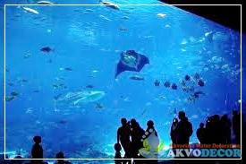 Georgia Aquarium,Induk Aquarium Air Laut,Jual Aquarium Air Laut Murah