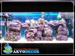 Jenis-Jenis Aquarium Air Laut | Jual Aquarium Air Laut