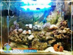 Langkah-Langkah Membuat Akuarium Air Laut Yang Baik   Jual Aquarium Murah
