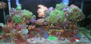corals reef aquarium