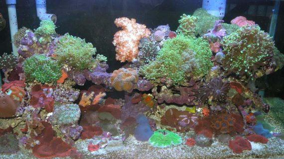 Keindahan Aquarium Air Laut