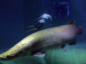 koleksi-aquarium-air-tawar-jakarta