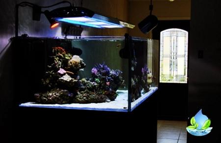 Dimana Jasa Pembuatan Aquarium Air Laut di Jakarta