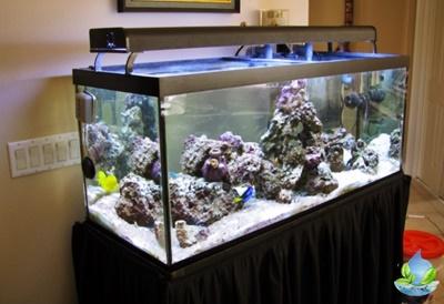 Jasa Perawatan Aquarium Air Laut Jakarta