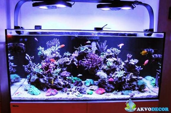 Jenis-Jenis Aquarium Air Laut 2 akvodecor