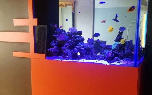 Jenis-Jenis Aquarium Air Laut 3 akvodecor