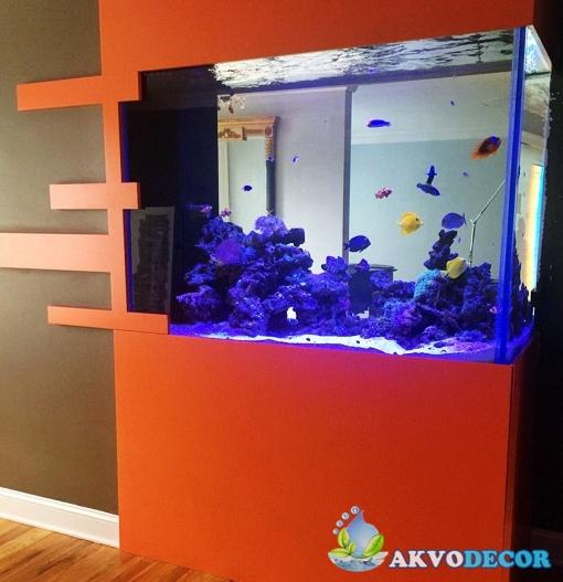 Jenis-Jenis Aquarium Air Laut