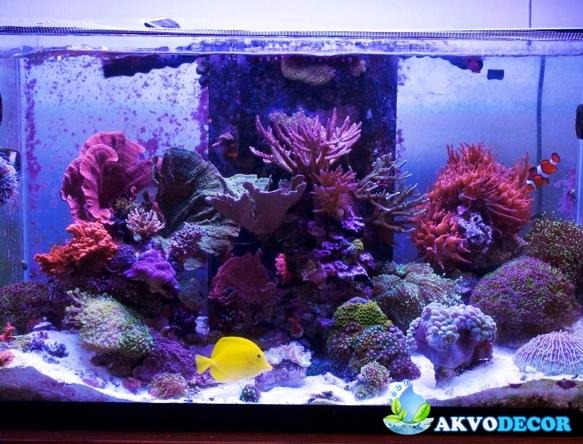 Jenis-Jenis Aquarium Air Laut 4 akvodecor