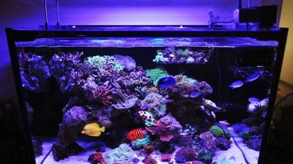Tempat Jual Aquarium Air Laut di Serpong Akvodecor