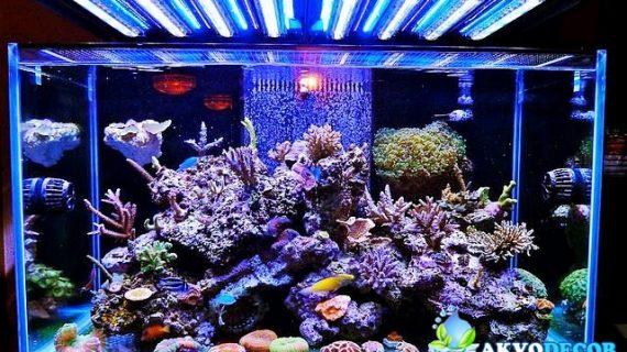 Melihat Lebih Jauh Hobi Aquarium Air Laut