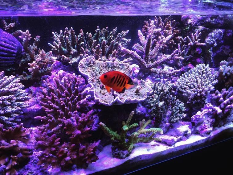Keunggulan Aquarium Air Laut - Akvodecor.com
