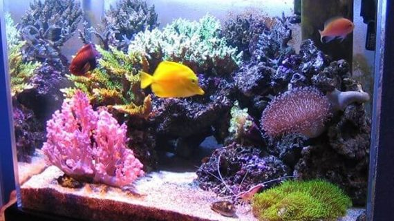 Aquarium Air Laut, Berikut Ini Faktanya