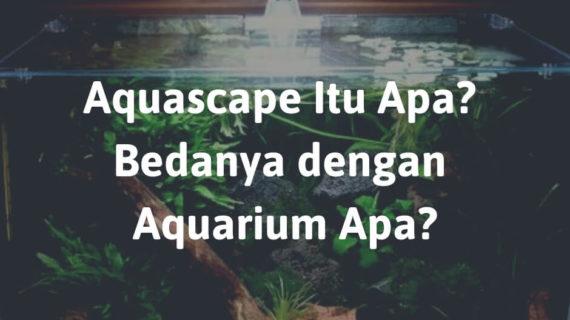 Aquascape Itu Apa? Bedanya dengan Aquarium Apa?