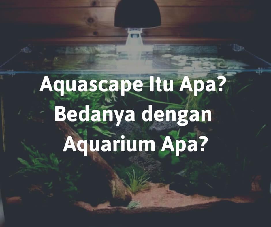 Aquascape Itu Apa Bedanya dengan Aquarium Apa